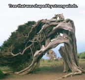Overly dramatic tree…