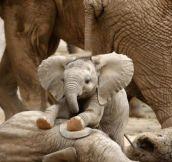 The Internet needs more little baby elephants…