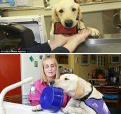 Ultimate dog…