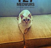127 Meowurs…