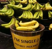Single bananas…