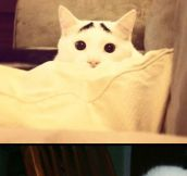 The cat with eyebrows…