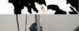Stealthy cat…