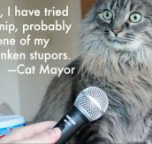 Cat Mayor's controversial declaration…