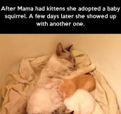 Mama Cat and her adopted squirrels…
