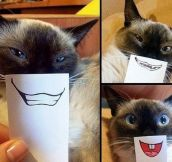 Cat photo shoot idea…