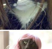 Cats wearing wigs…