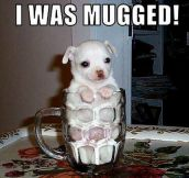 Mugged puppy…