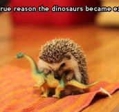 Why dinosaurs became extinct…