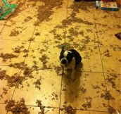 Some dogs just want to watch the world clean up their mess…