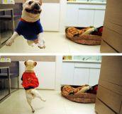 Super dog…
