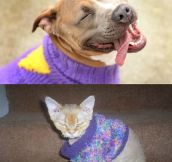 How pets react to sweaters…