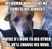 Every dog thinks this makes perfect sense…