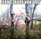 Van Damme has nothing on this dog…