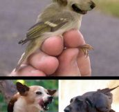 If you mix dogs and birds…