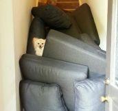 Dog Fort…