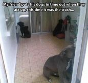Dog punishment…