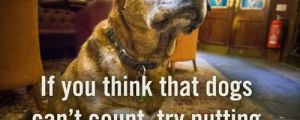 If you think dogs can't count…
