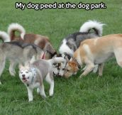 My dog at the dog park…