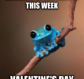The frog has a point…