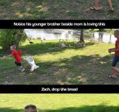 Feeding a geese…