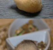 Hamster butts…