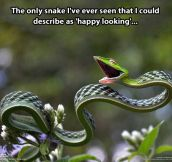 Happy looking snake…