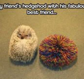 Hedgehog's best friend…