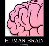 Human brain is greatest one…