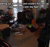 How to easily find your cat…