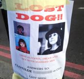 Looking for a lost dog…