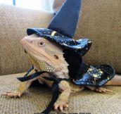Lizard wizard…