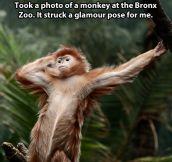 Glamorous monkey…