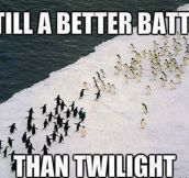 Antarctica's epic battle…