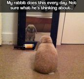 Introspective bunny…