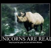 Unicorns have been among us for a long time…
