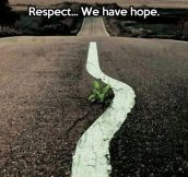 Hope in the road…