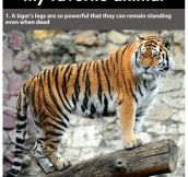 Facts about Tigers (22 Pics)