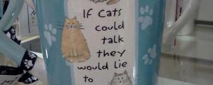 Cats are untrustworthy