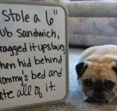 Hey, Pug! What Are You Doing There (13 pics)