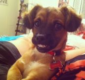 32 Dogs Doing Hilariously Awkward Things