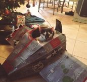 My kitten got his own plane for Christmas