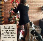 The Best of Dog Shaming – Christmas (21 pics)
