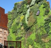 Vertical garden in Madrid