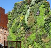 Vertical garden in Madrid…