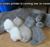 Kitty printer…