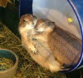 The cutest couple ever…