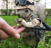 Marine squirrel…