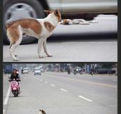 Dog feels…