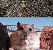 Hamster dam…